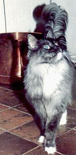 Dovregubben's Egil Skallagrimsson er far til Mischa og søn af Torvmyras Soltario.