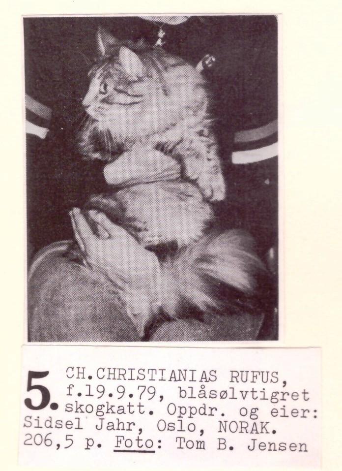 CH Christiania's Rufus ca. 1981