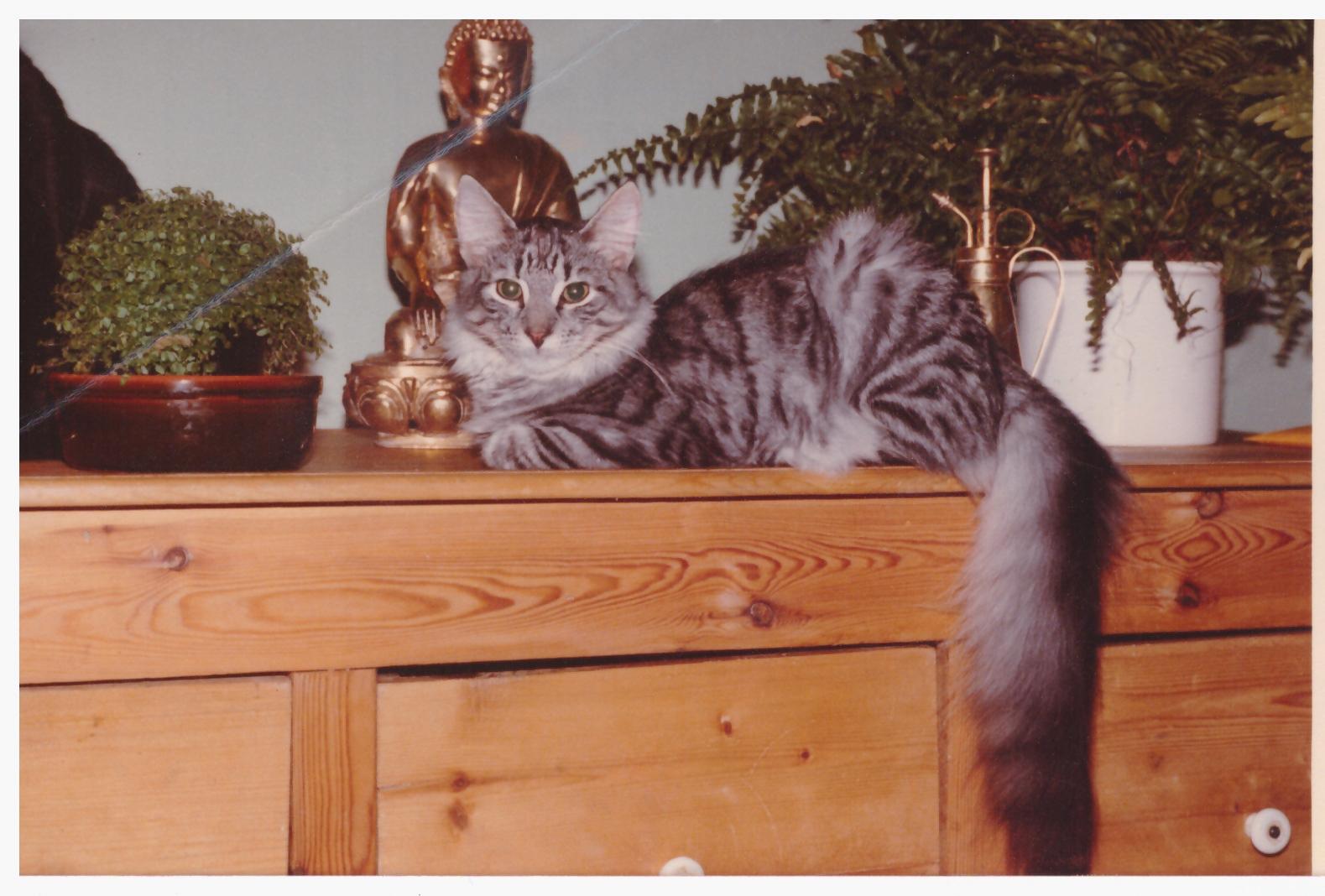 Torvemyra's Grand Soltario 1981