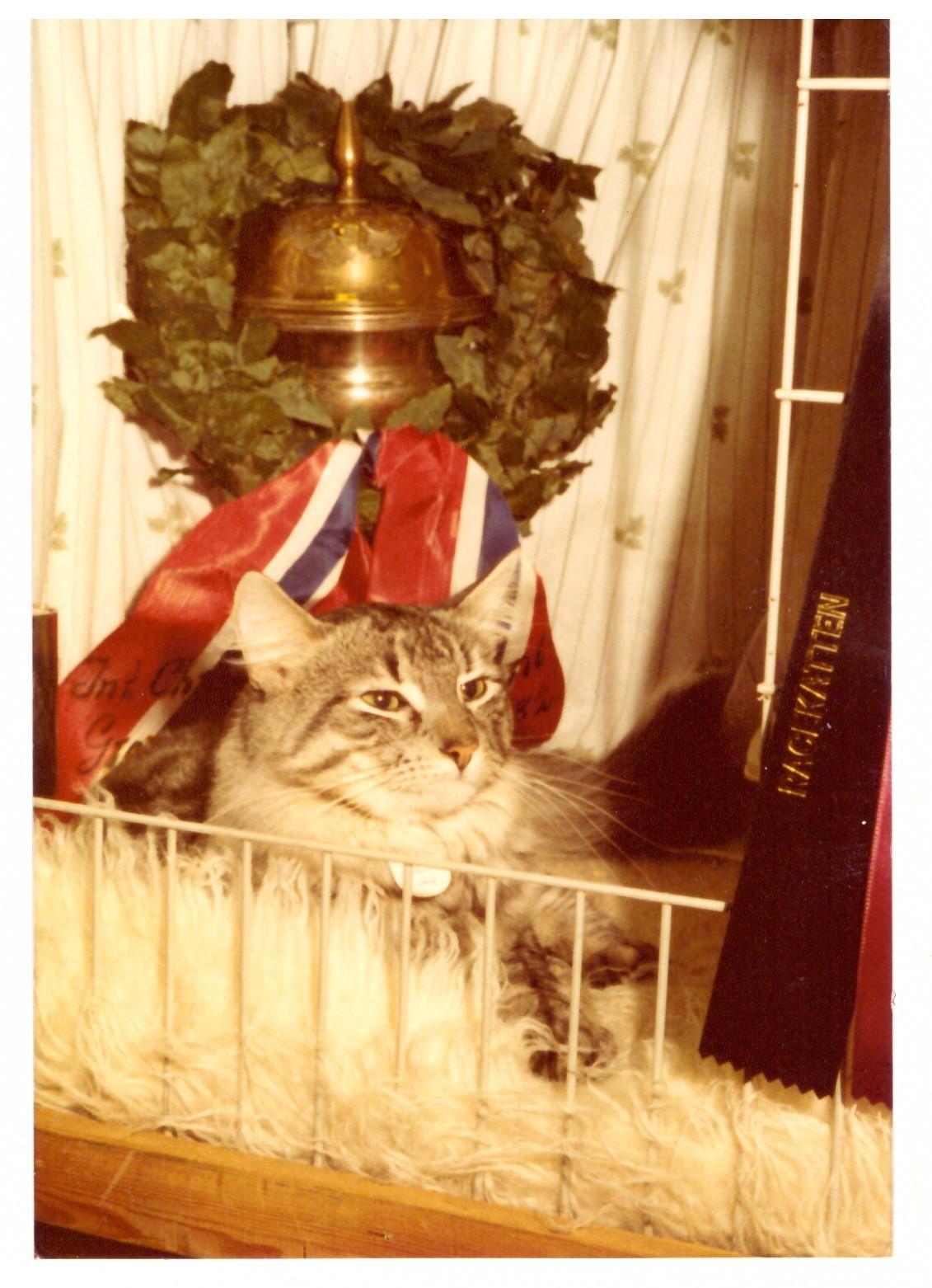 Torvemyra's Grand Soltario, Årets kat