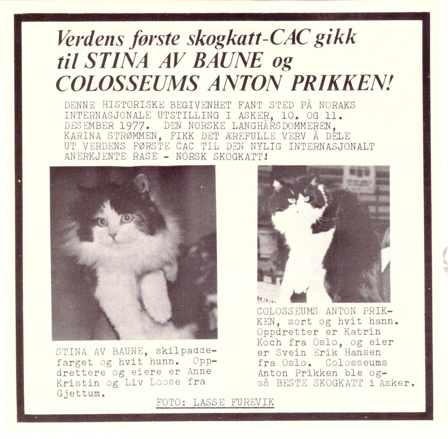 Verdens første CAC til Norsk Skovkat ca. 1978