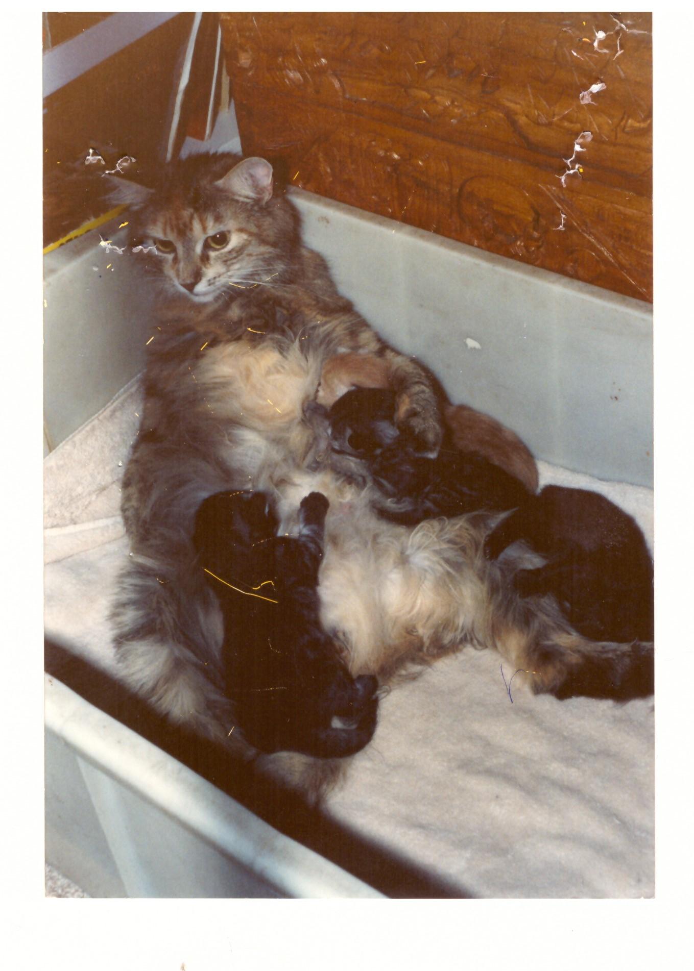 Tiger Lilly med killinger