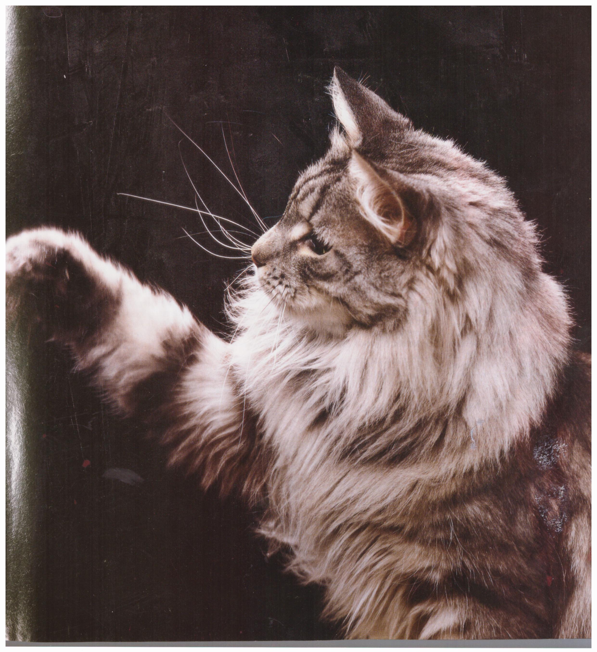 Torvemyra's Grand Soltario 1983-84