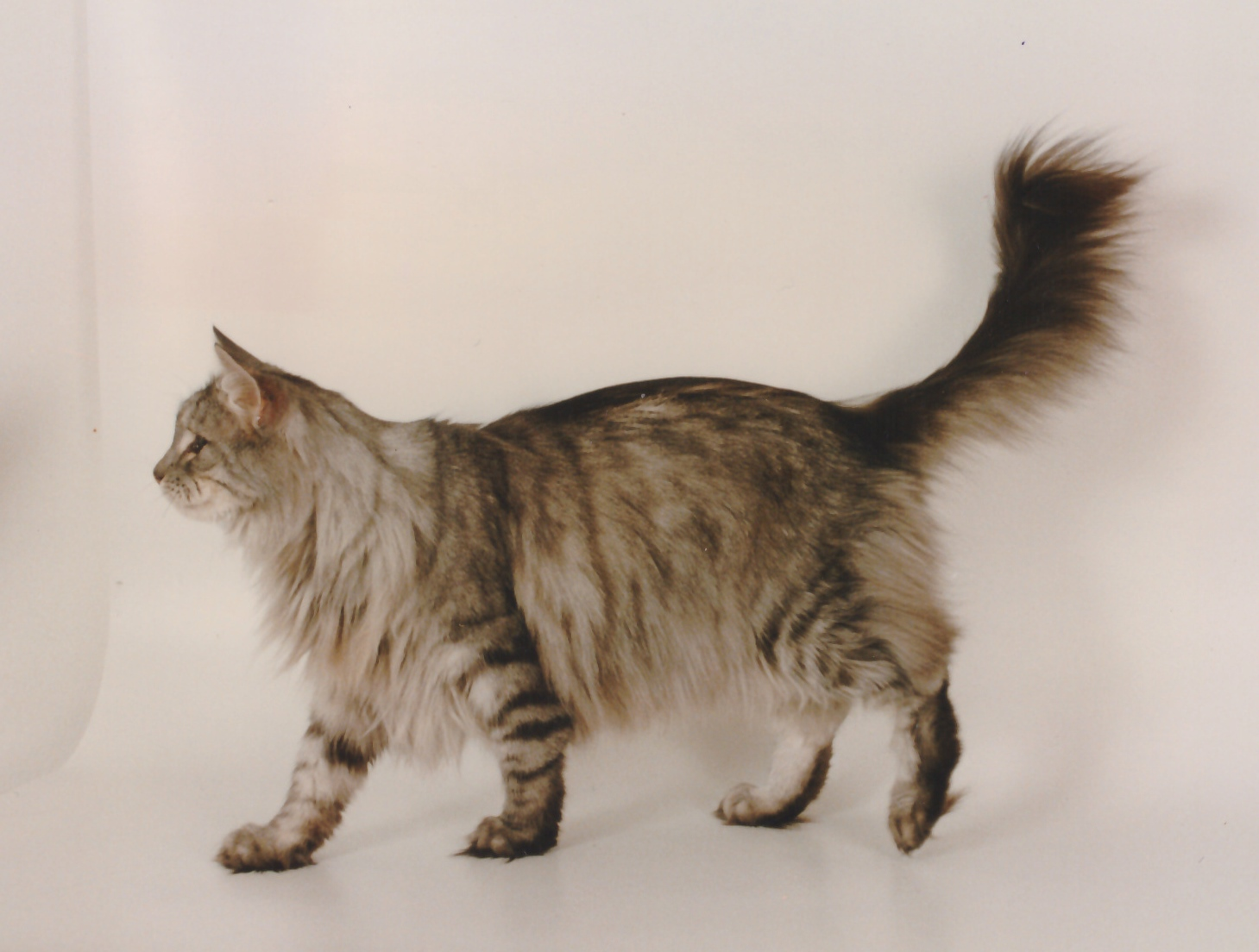 Torvemyra's Grand Soltario 1992