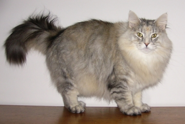 #4 PR S* Just Catnap's Vega. Ejer: Tine Hessellund. Points 568