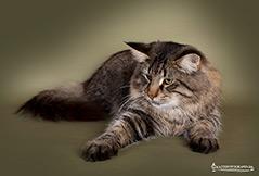 #5 Toonscat's Jumanji. Ejer: Pia & Michael Robdrup. Points 550