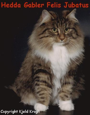 Østrig 1991 Hedda Gabler Felis Jubatus NFO n 09 23